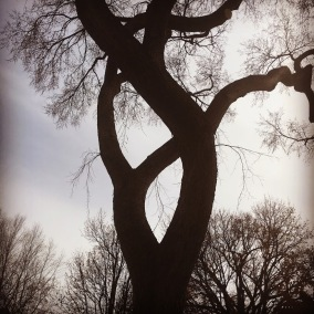 treebeauty.jpg